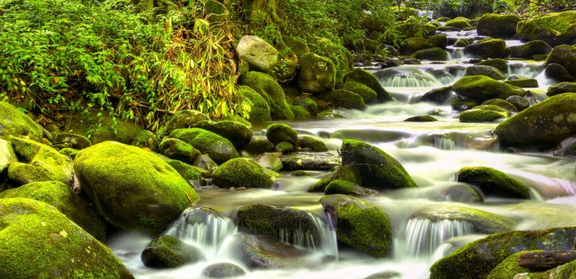 Water cascades over moss covered rocks, in Great Smoky National Park.